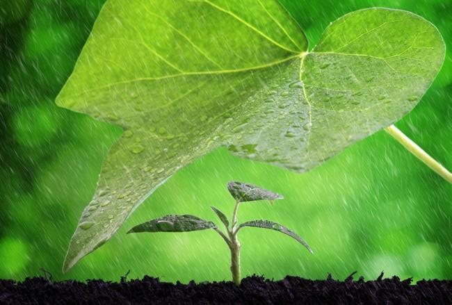 plant rain